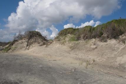 Copy of Photo of Jekyll Island Sand Dune